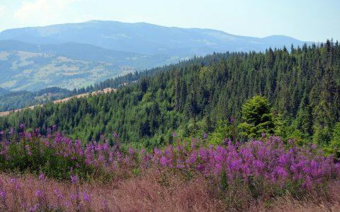 Cele mai frumoase parcuri naționale din România - travelandbeauty.ro