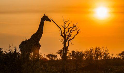 Te-ai hotărât să faci un safari? Iată câteva sfaturi de bun simț pentru o experiență cât mai reușită. - travelandbeauty.ro
