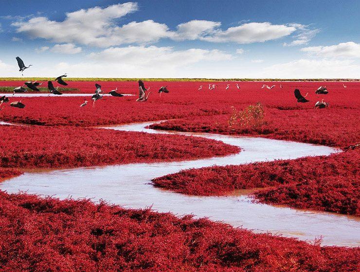Plaja roșie din Liaoning, China - travelandbeauty